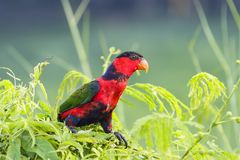 Red and green parrot resting on tree. Close up red and green parrot resting on tree Stock Image