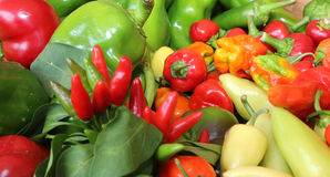 Red and green pepper for sale Stock Image