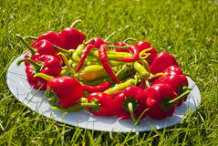 Red and green peppers. Plate on grass Royalty Free Stock Photography