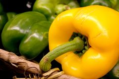 Red and Green Peppers. Peppers in Basket Stock Photography