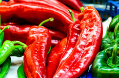 Red and green peppers Royalty Free Stock Photo