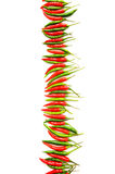 Red and green peppers isolated Stock Image
