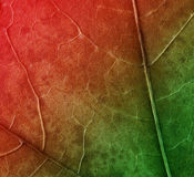 Red green plant texture stock image