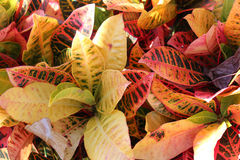 Red and green plants. Bunch of exotic red and green leaf plants Stock Photography