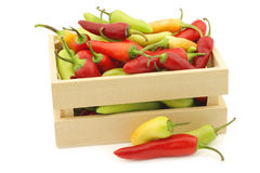 Red and green rawit peppers Capsicum annuum `Bird`s Eye` Stock Photos