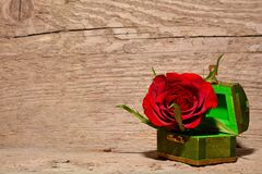 Red and Green Rose Inside Green and Brown Chest Box Royalty Free Stock Photography