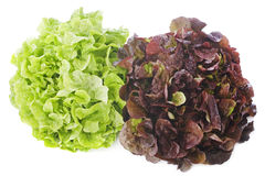 Red and green salads Royalty Free Stock Photo