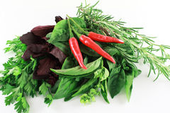 Red and green spices with chili paprika. Different colored spices with three chili paprika Royalty Free Stock Photo