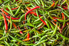 Red and green spicy chili peppers Royalty Free Stock Images