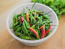 Red and green Thai Chili. royalty free stock photos