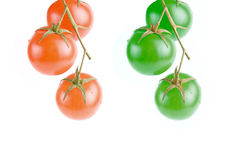 Red and green tomatoes. On the green branch Royalty Free Stock Photos