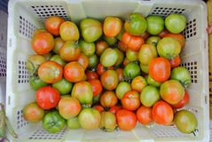 Red and green tomatoes in basket. At market Stock Image