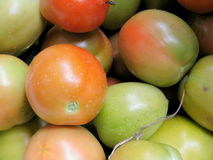 Red and green tomatoes closeup. Red and green tomatoes grown in the garden Royalty Free Stock Image