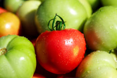 Red and green tomatoes. Closeup shot of red and green tomatoes Stock Images
