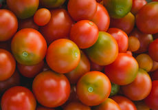 Red with green tomatoes Royalty Free Stock Photography
