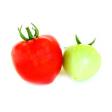 Red and green tomatoes Royalty Free Stock Image