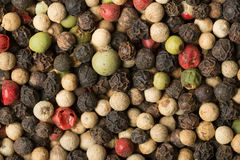 Red, green, white and black pepper Stock Image