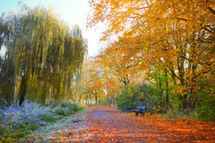 Red, green and yellow autumn leaves, autumn trees Royalty Free Stock Images