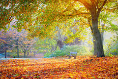 Red, green and yellow autumn trees Royalty Free Stock Photography