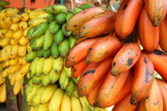 Red, Green and Yellow Bananas. Red, green and yellow banana bunches in a fruit shop along the road (Sri Lanka Stock Image