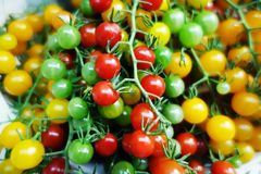 Red, green and yellow cherry tomatoes. Fresh colorful red, green and yellow cherry tomatoes on a branch. Shallow depth of field Stock Photos