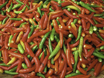 Red, Green And Yellow Chili Peppers. Fresh Red, Green And Yellow Chili Peppers Royalty Free Stock Photography