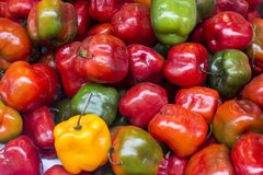 Red, green and yellow chilli pepper from peru rocoto Royalty Free Stock Photos