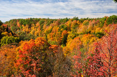 Red, green and yellow maple trees in fall Royalty Free Stock Image