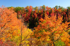 Red, green and yellow maple trees in fall Royalty Free Stock Photo