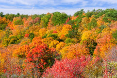 Red, green and yellow maple trees in fall Royalty Free Stock Images