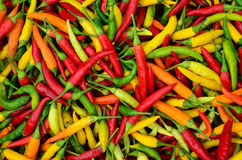 Red, green and yellow peppers. Full frame of red, green and yellow peppers background - heap of peppers in cardboard box ready for sale Royalty Free Stock Photos
