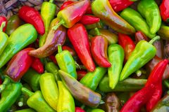 Red green yellow purple hot Peppers Stock Photography