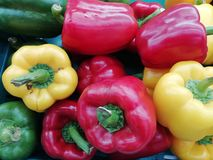 Red, Green and Yellow sweet pepper. stock photography