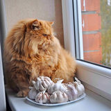 Red grooming cat is sitting next to the window next to the garlic. Stock Photography