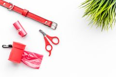 Red grooming tools for training pet with collar on white background top view mock-up Stock Photo
