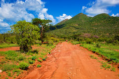 Red ground road, bush with savanna. Tsavo West, Kenya, Africa. Red ground road and bush with savanna landscape in Africa. Tsavo West, Kenya stock photo