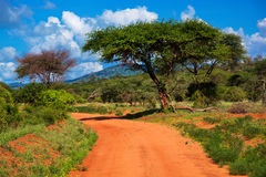 Red ground road, bush with savanna. Tsavo West, Kenya, Africa. Red ground road and bush with savanna landscape in Africa. Tsavo West, Kenya royalty free stock images