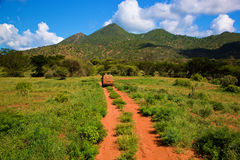Red ground road, bush with savanna. Tsavo West, Kenya, Africa. Red ground road and bush with savanna landscape in Africa. Tsavo West, Kenya royalty free stock photography