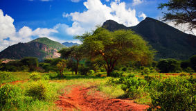 Red ground road, bush with savanna. Tsavo West, Kenya, Africa. Red ground road and bush with savanna panorama landscape in Africa. Tsavo West, Kenya royalty free stock image