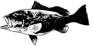 Red grouper fish vector. Large predatory saltwater fish caught mostly on dead bait around reefs Stock Photo