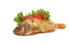 Red grouper fried fish Royalty Free Stock Photos