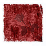 Red grungy background with rose Royalty Free Stock Images