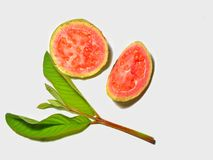 Red guava isolated on white background. Tropical fruit concept .Guava fruits with green leaf stock image