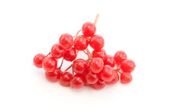 Red guelder-rose. Branch of a fresh ripe guelder-rose on a white background Royalty Free Stock Photo