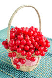 Red guelder rose berries in small wicker on blue underlay. Red berries of guelder rose in small wicker basket on blue underlay Royalty Free Stock Images