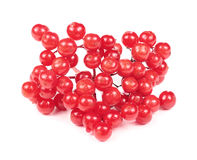 Red Guelder Rose (Viburnum Opulus) Berries Stock Images