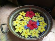 Red Gumamela and Yellow Calachuchi Flowers. Floating in potery of water Stock Images
