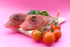 Red Gurnard Fish And Tomatoes stock photos