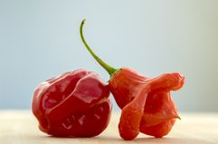 Red habanero and red bishops crown. Close up view, hot peppers Stock Photography