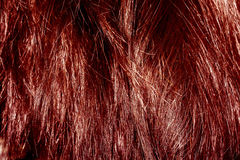 Red Hair Texture Stock Images